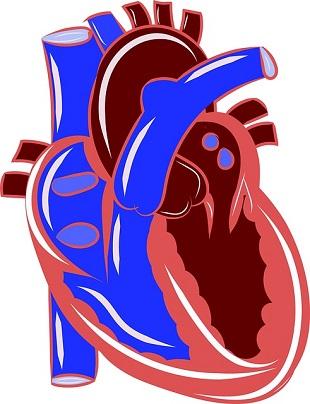 Omega 3 och Hjärt och kärlsjukdomar